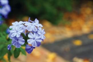 BluePhlox