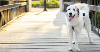 "Meet Benjamin Pendleton<span class=""subtitle"">Out of This World Spectacular Pet Search 2019 Winner</span>"