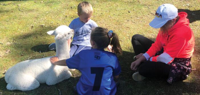 "Alpacas Sweet, Gentle & Curious <span class=""subtitle""> Oasis Acres Alpacas of Highland</span>"